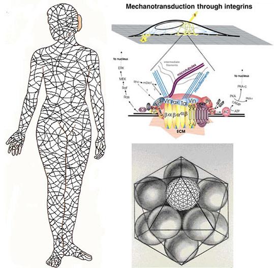 身体のバランスを構成している筋膜