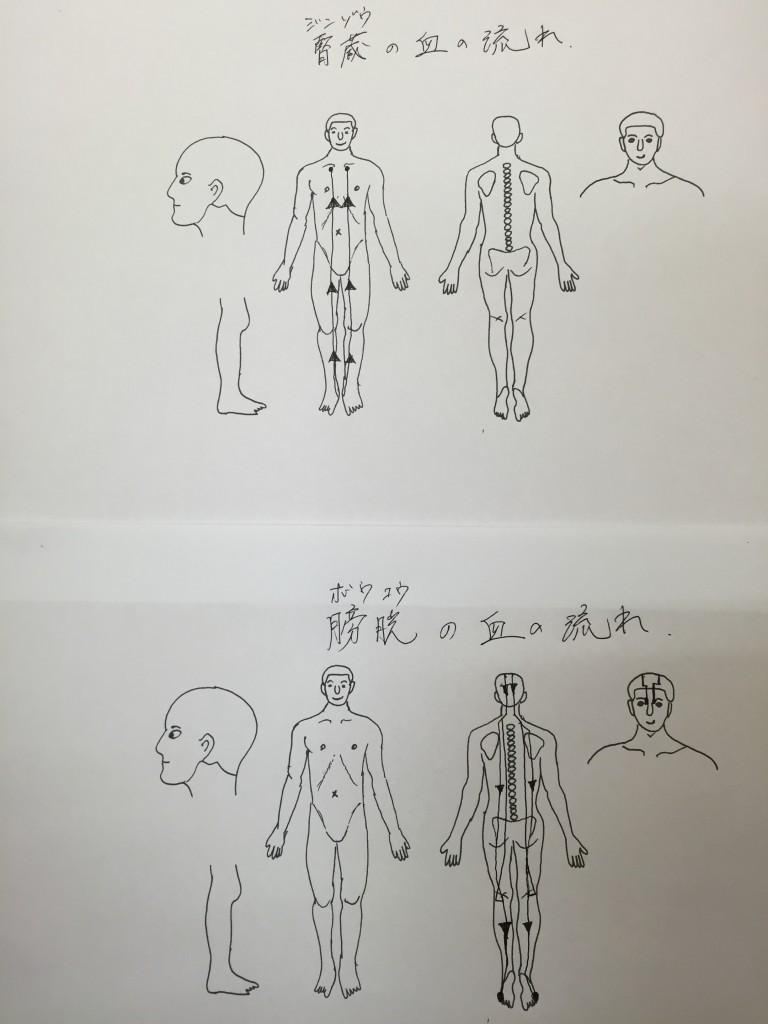 腎臓と膀胱の血の流れ
