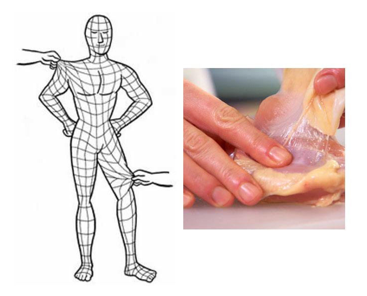 身体の全身を覆っている筋膜